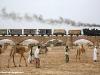 una 442 delle Ferrovie Eritree alla testa di un treno merci sul ponte di Moncullo, lungo la ferrovia Massaua-Asmara. (foto G. Berto / tuttoTreno)