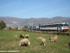 Le ALn 773 015 e 880 001 in transito presso Alife. (03/11/2007; foto Francesco Maria / tuttoTreno)