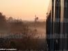 Uno scatto all'alba dal finestrino dell'AD 34 delle FSE sul segnale di protezione della stazione di Zollino posto a via impedita. (09/10/2009; Luigi Mighali / tuttoTreno)